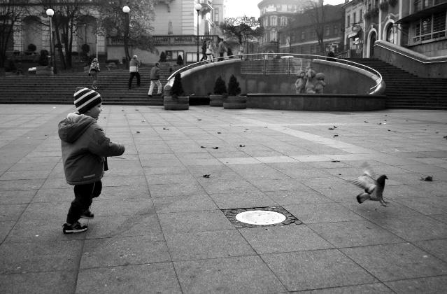 Bird hunt - Szymon